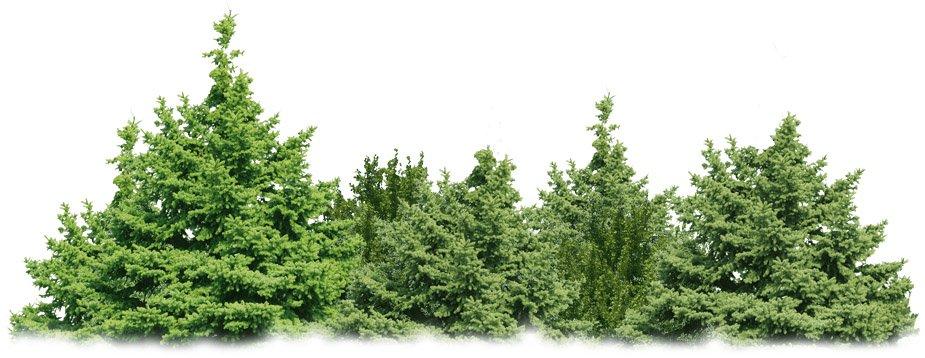Mehrere Bäume